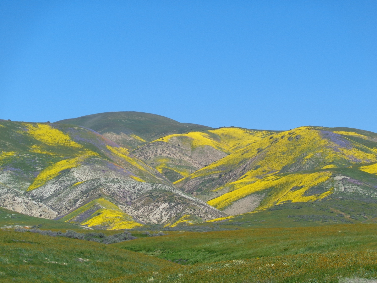 My Maiden Super Bloom Trip to The Carrizo Plain