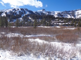 Kirkwood Meadow
