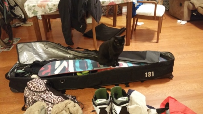 Beau in snowboard bag