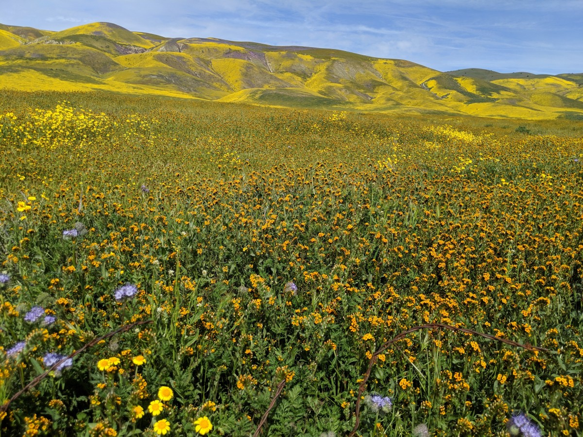 Carrizo Plain Super Bloom 2019
