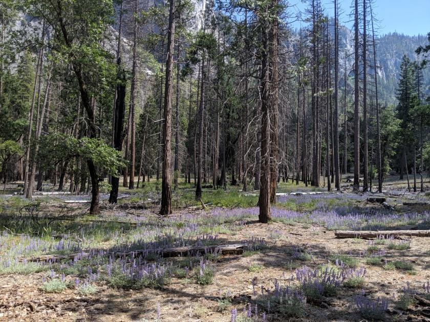 Yosemite86
