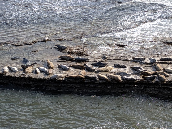 Seals on Wave Platform
