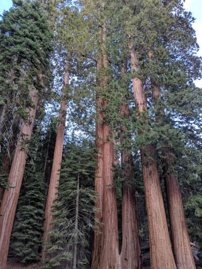 SequoiaNationalPark57