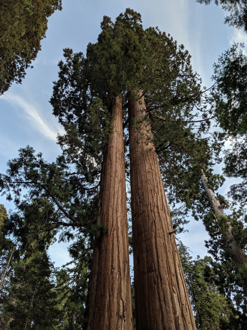 SequoiaNationalPark54