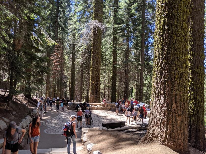SequoiaNationalPark67