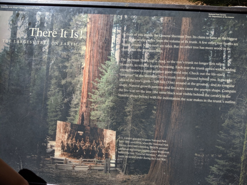 SequoiaNationalPark69