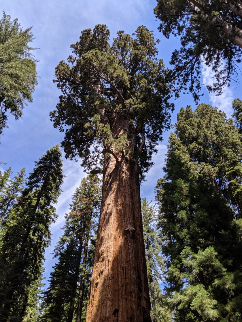 SequoiaNationalPark76