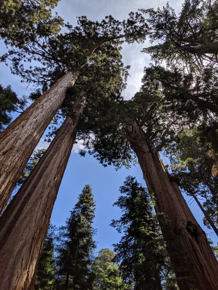 SequoiaNationalPark78