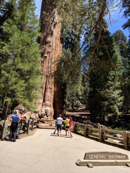 SequoiaNationalPark86