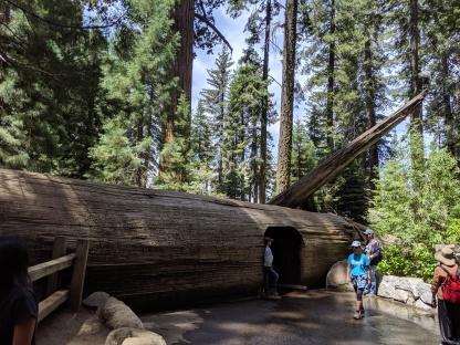 Tunnel Tree