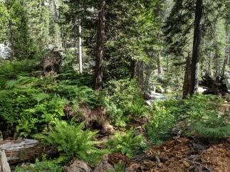 SequoiaNationalPark50