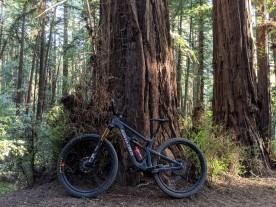 RedwoodBike