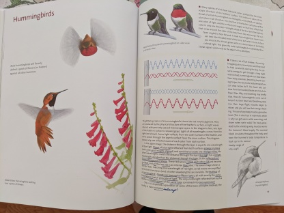 Hummingbird Pages