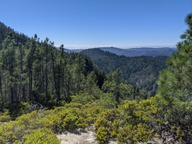 View From Buzzard's Crest, Big Basin